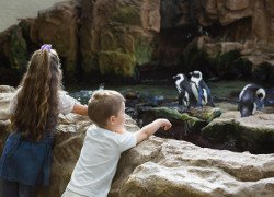 Children watch the penguins at Central Park Zoo